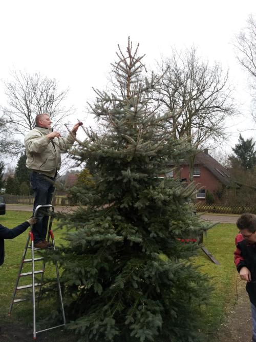 Der Weihnachtsbaum wird aufgestellt